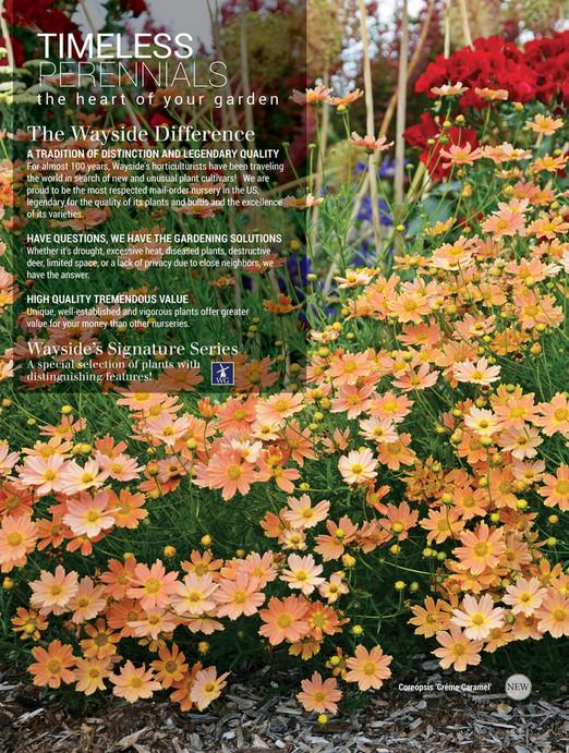 Online Catalog Wayside Gardens