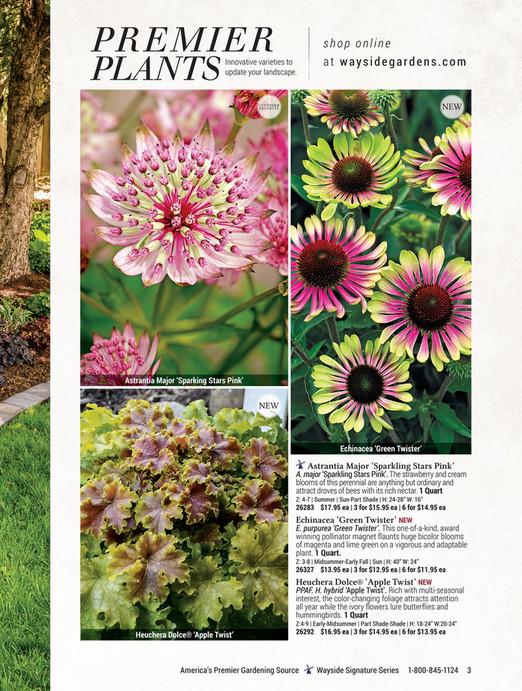 PR EM I ER PLANTS Shop Online Innovative Varieties To Update Your  Landscape. At Waysidegardens