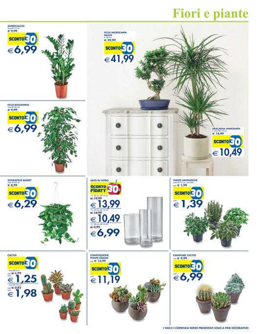vaso Fiori e piante ZAMIOCULCAS vaso Ø 17 cm e 9,99 30 FICUS MICROCARPA  PALCHI