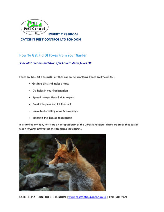 EXPERT TIPS FROM CATCH-‐IT PEST CONTROL LTD LONDON How To Get Rid Of