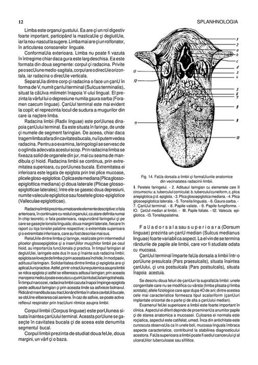 Anatomia Omului Pdf