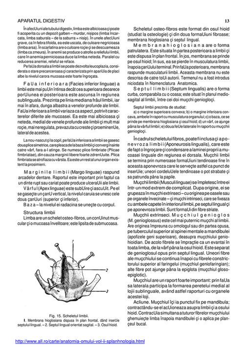Anatomia Papilian Pdf