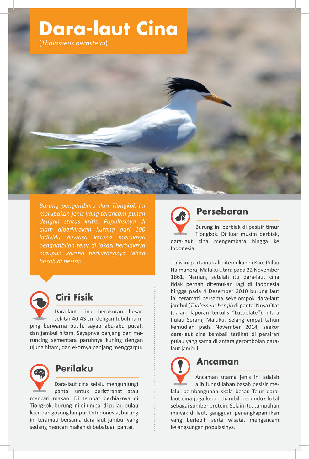 Publication Dara Laut Cina Chinese Crested Tern Page 1