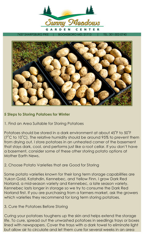 Sunny Meadows - Potatoes for Winter Storage - Page 1 - Created with